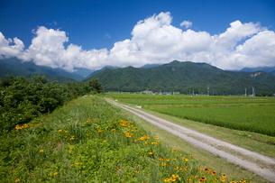 農道と水田の写真素材 [FYI01618440]