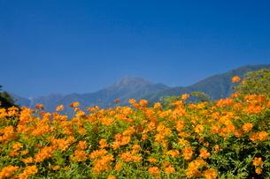 国営アルプスあづみの公園より常念岳の写真素材 [FYI01618571]