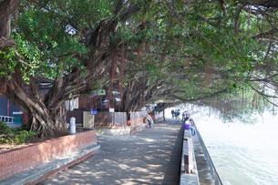 遊歩道と木陰の写真素材 [FYI01618612]
