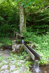 木曽路の鳥居峠の水場の写真素材 [FYI01618772]