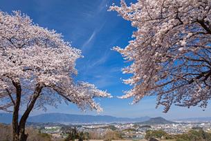 甘樫の丘より大和盆地と桜の写真素材 [FYI01618861]