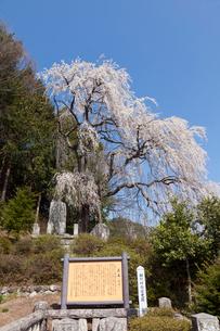 安曇野鼠穴の桜の写真素材 [FYI01619083]