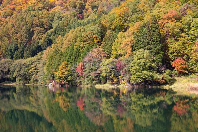 中綱湖の紅葉の写真素材 [FYI01619090]