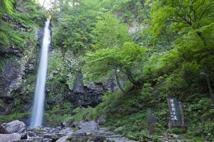 阿弥陀ヶ滝の写真素材 [FYI01619206]