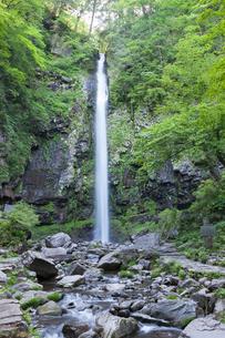 阿弥陀ヶ滝の写真素材 [FYI01619237]