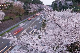 金沢城公園と桜の写真素材 [FYI01619265]