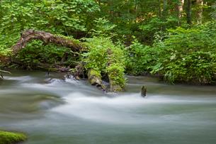 奥入瀬渓流の写真素材 [FYI01619324]