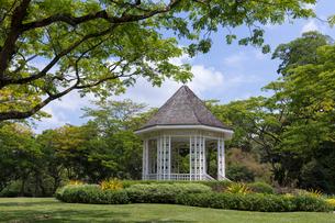 シンガポール・ボタニック・ガーデンの写真素材 [FYI01619505]