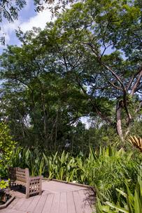 シンガポール・ボタニック・ガーデンの写真素材 [FYI01619572]