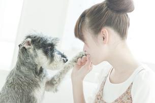 室内でミニチュアシュナウザーと遊ぶ若い日本人女性の写真素材 [FYI01619609]
