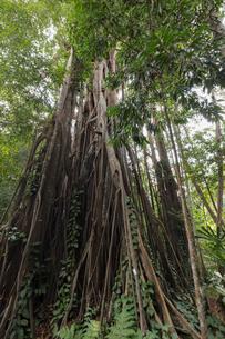 シンガポール・ボタニック・ガーデンの写真素材 [FYI01619656]