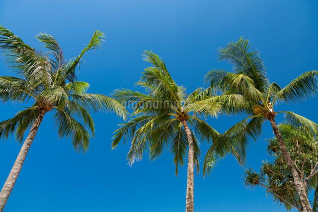 パトンビーチの写真素材 [FYI01619694]
