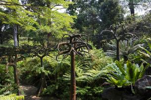 シンガポール・ボタニック・ガーデンの写真素材 [FYI01619774]