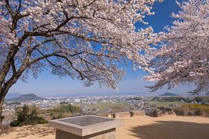 甘樫の丘より大和盆地と桜の写真素材 [FYI01619886]