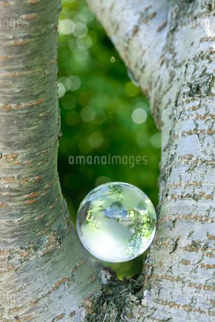 林の中の地球儀の写真素材 [FYI01620023]