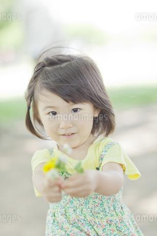 野花を差し出す女の子の写真素材 [FYI01620026]