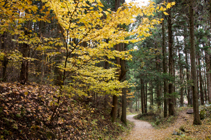 秋の馬籠峠の写真素材 [FYI01620046]