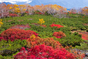 秋の乗鞍の写真素材 [FYI01620102]