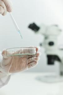 バイオの研究をする男性研究者の手の写真素材 [FYI01620446]