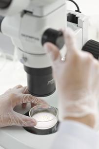顕微鏡で調べる男性研究者の手の写真素材 [FYI01620495]