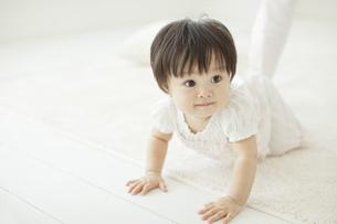 はいはいをする赤ちゃんの写真素材 [FYI01620567]