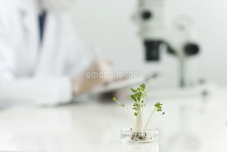 バイオの研究をする男性研究者の写真素材 [FYI01620631]