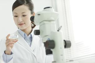 シャーレを観察する日本人女性研究者の写真素材 [FYI01620650]