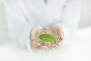 葉っぱを持つ日本人女性研究者の写真素材 [FYI01620932]