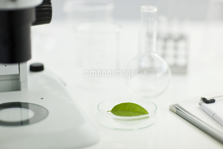 顕微鏡と葉の写真素材 [FYI01621124]