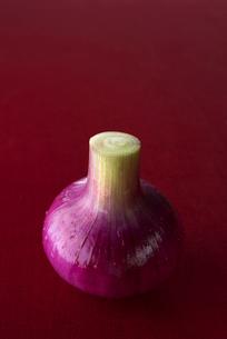 赤玉葱の写真素材 [FYI01621340]