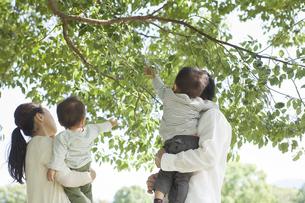 木の枝に手を伸ばすファミリーの写真素材 [FYI01621818]