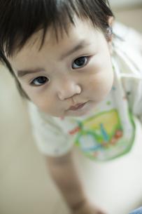日本人赤ちゃんの写真素材 [FYI01622058]