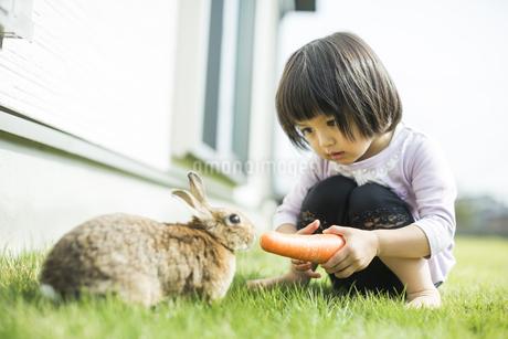 ウサギに人参を与える女の子の写真素材 [FYI01622290]