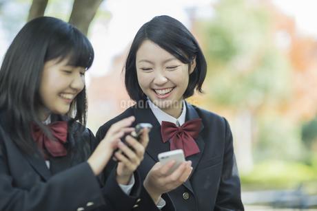 携帯電話を持って会話をする女子高校生の写真素材 [FYI01622462]