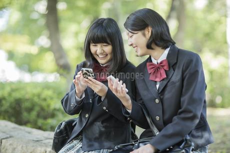 携帯電話を持って会話をする女子高校生の写真素材 [FYI01623666]
