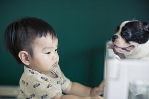 赤ちゃんとフレンチブルドッグの写真素材 [FYI01623803]