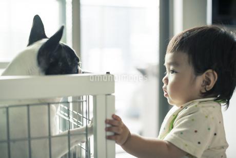 赤ちゃんとフレンチブルドッグの写真素材 [FYI01624606]