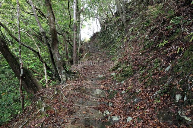 熊野古道中辺路の赤木越の写真素材 [FYI01624998]