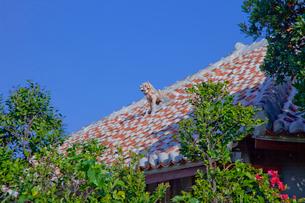 赤瓦屋根と魔除けのシーサーの写真素材 [FYI01625137]