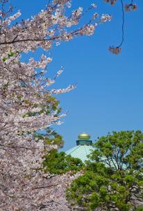 北の丸公園の日本武道館とサクラの写真素材 [FYI01625138]