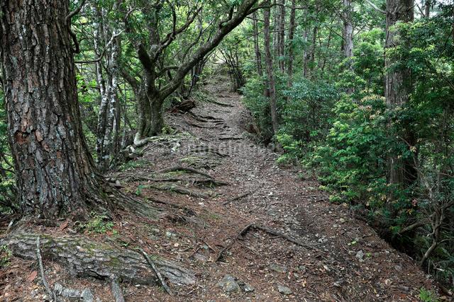 熊野古道中辺路の赤木越の写真素材 [FYI01625154]