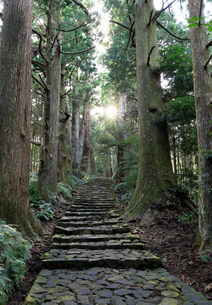 熊野古道中辺路の大門坂石畳の写真素材 [FYI01625156]