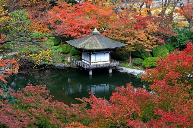 紅葉渓庭園の紅葉の写真素材 [FYI01625186]