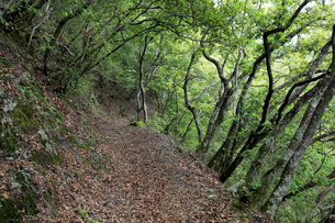 熊野古道中辺路の赤木越の写真素材 [FYI01625228]