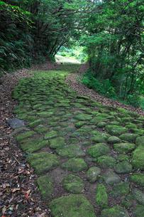 熊野古道中辺路の高野坂石畳の写真素材 [FYI01625337]
