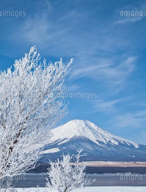 雪の山中湖と富士山の写真素材 [FYI01625390]