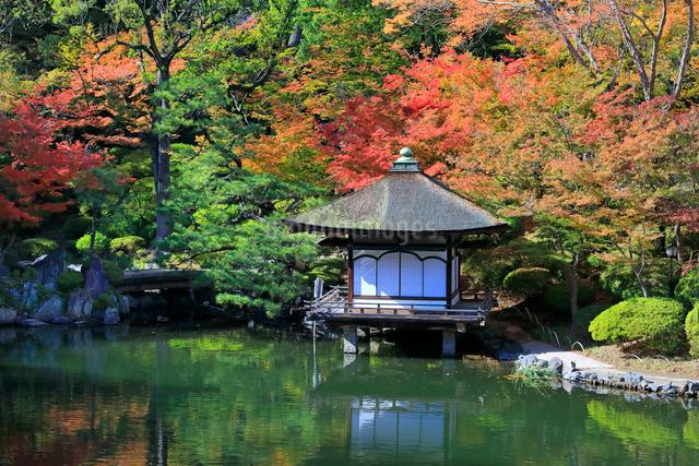 紅葉渓庭園の紅葉の写真素材 [FYI01625547]