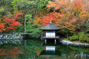 紅葉渓庭園の紅葉の写真素材 [FYI01625569]