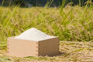 升に入ったお米と稲穂の写真素材 [FYI01625626]