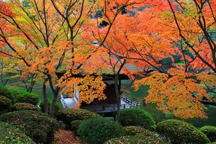 紅葉渓庭園の紅葉の写真素材 [FYI01625723]